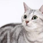 洗わなくてもイイ匂い、猫が臭くならない理由とは