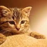 何のためにやってる?猫の「フミフミ」に込められた意味