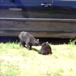 【ネコネコ動画】ちょっと息抜き、ネコの面白い動画厳選3つ