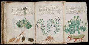 1280px-Voynich_Manuscript_(170)