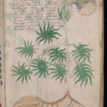 【ミステリー不思議】未だ解読されない謎の書物『ヴォイニッチ手稿』とは、解説&考察